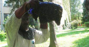 Hasiči zaznamenali rapídny nárast výjazdov k bodavému hmyzu
